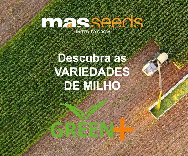 masseeds - publicidade