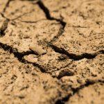 Secas e ondas de calor triplicaram na Europa, investigadores analisam impacto na agricultura