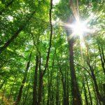 Conselho Europeu aprova lei Europeia do Clima