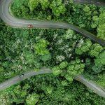 Nova Estratégia da UE para as Florestas: mais proteção e restauro até 2030