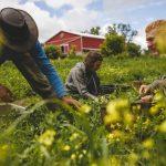 Política Agrícola Comum: como é que a UE apoia os agricultores?